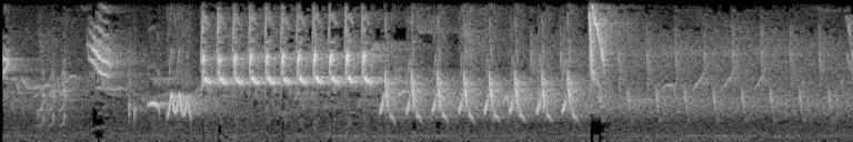 spectorgram